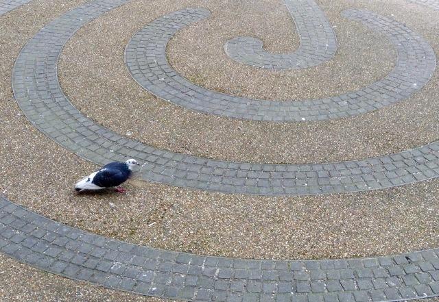 fen court pigeon